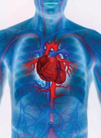 El ajo tiene propiedades beneficiosas para el corazon y le sistema cardiovascular