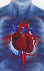El ataque cardiaco es una enfermedad del sistema circulatorio