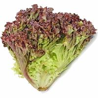 Lechuga tipos de hojas